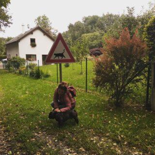 My v tom máme jasno s Gregorem 🐕!  🐈⭕  #cats #catstagram #catslover #frenchbulldog #bulldog #frenchdog #naturelover #nature #naturephotographer #czechrepublic🇨🇿 #czechmade #czechwoman #autumn #autumnleaves #autumnoutfit #colours #coloursaround #autumnvibes #autumnstyle #mood #katzenverboten #katzen #katzenliebe